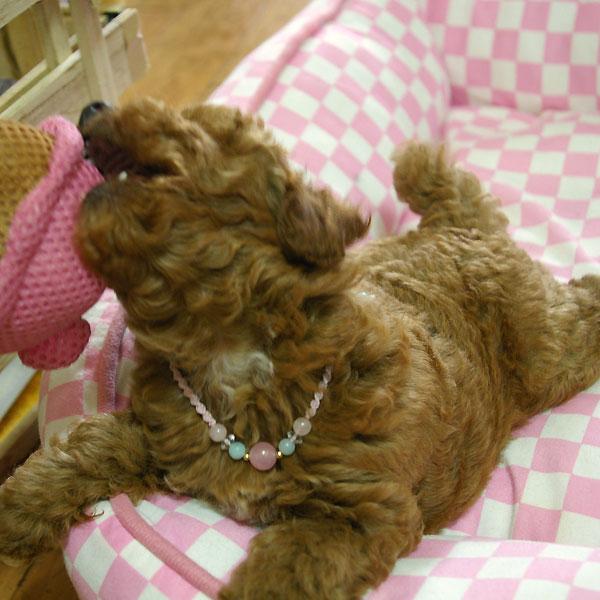 子犬用アクセサリー マクラメアクセサリー